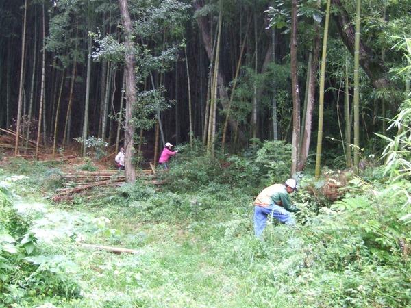 学校訪問ー学校林の保全活動を取材しました